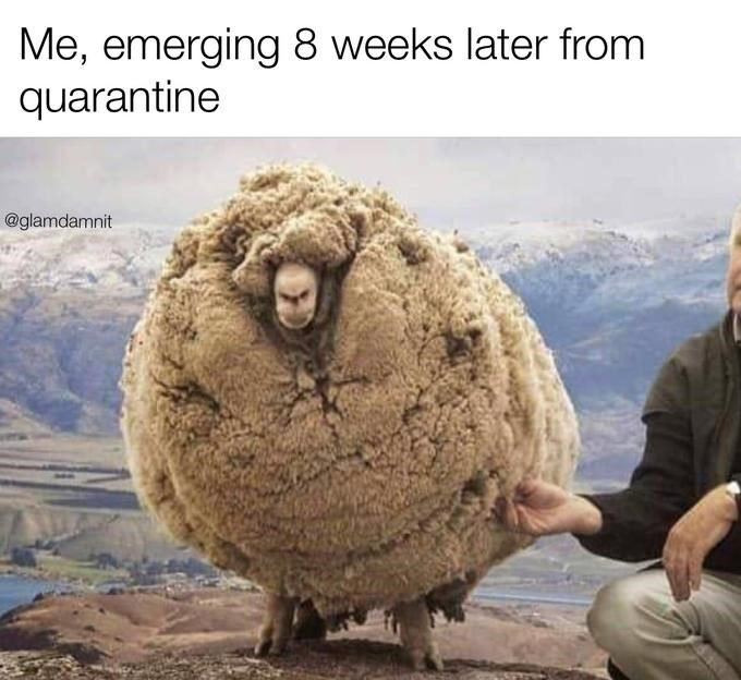 CLUB GIGGLE after-week8 31 Funny Quarantine Memes to Reduce Your Boredom...