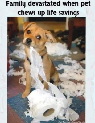 CLUB GIGGLE chew-up-saving 31 Funny Quarantine Memes to Reduce Your Boredom...