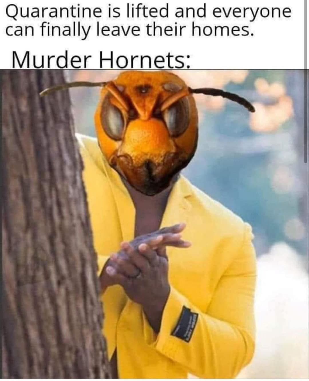CLUB GIGGLE murder-hornet 28 Funny Memes From The Dark Side....