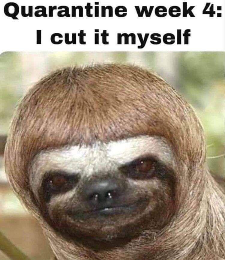 CLUB GIGGLE week4 31 Funny Quarantine Memes to Reduce Your Boredom...