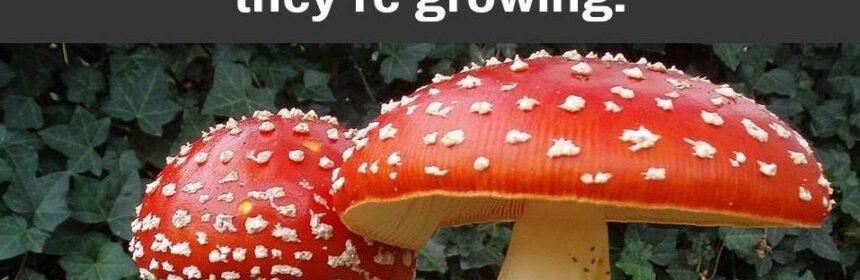 CLUB GIGGLE weird-facts1-860x280 20 Random Weird Facts of The Week...