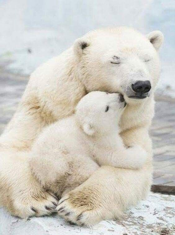 CLUB GIGGLE animals-with-mama Top 35 Photos That Show Love In The Animal World....