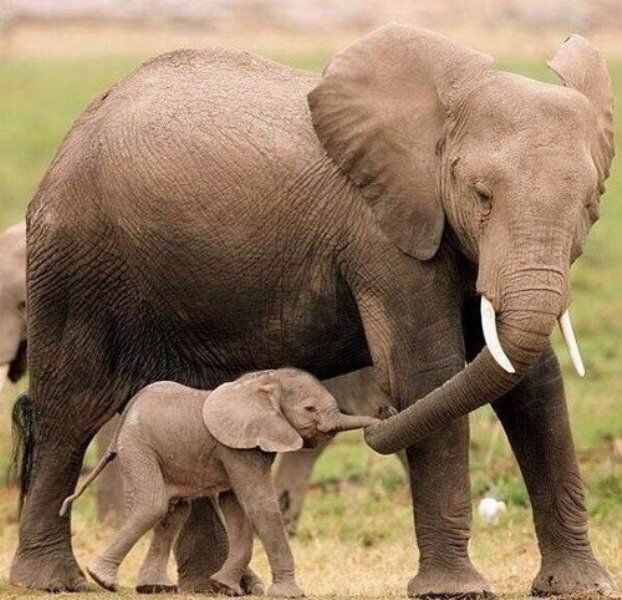 CLUB GIGGLE animals-with-mama1 Top 35 Photos That Show Love In The Animal World....