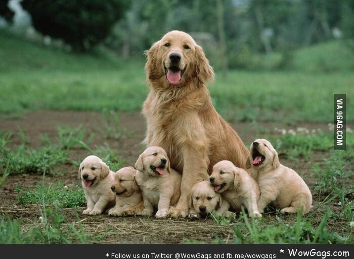CLUB GIGGLE animals-with-mama25 Top 35 Photos That Show Love In The Animal World....