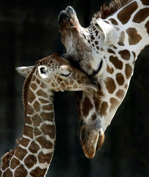 CLUB GIGGLE animals-with-mama29 Top 35 Photos That Show Love In The Animal World....