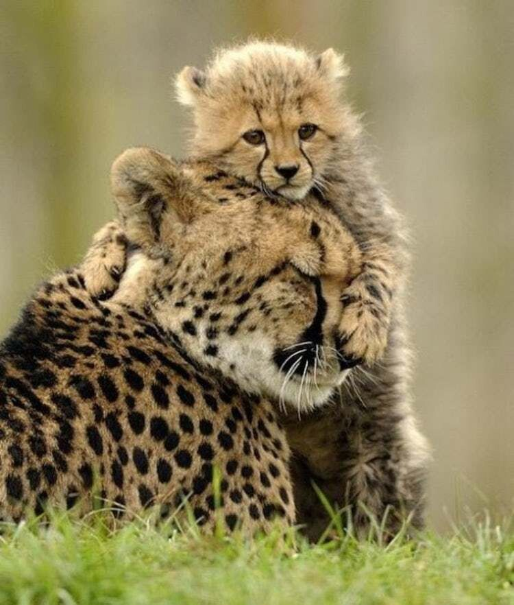 CLUB GIGGLE animals-with-mama3 Top 35 Photos That Show Love In The Animal World....