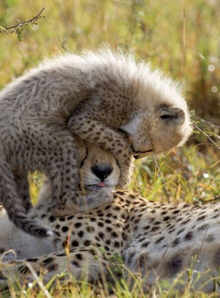 CLUB GIGGLE animals-with-mama5 Top 35 Photos That Show Love In The Animal World....