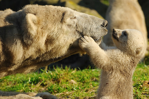 CLUB GIGGLE animals-with-mama6 Top 35 Photos That Show Love In The Animal World....