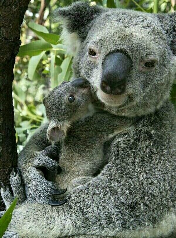 CLUB GIGGLE animals-with-mama8 Top 35 Photos That Show Love In The Animal World....