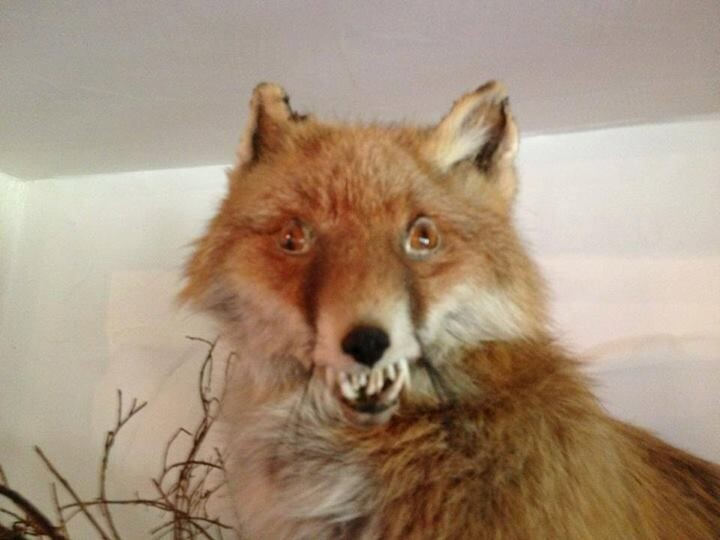 CLUB GIGGLE bad-taxidermy1 22 Times Taxidermy Went Very Very Wrong...