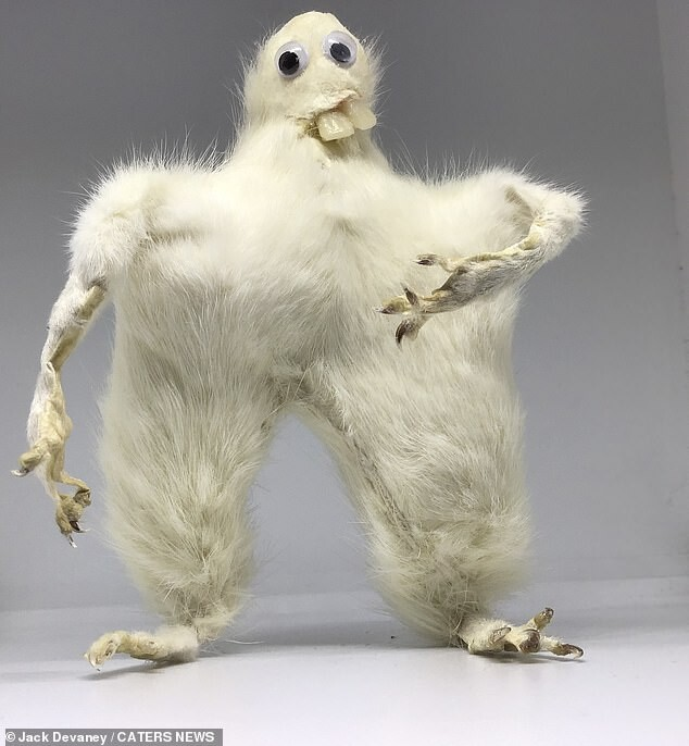CLUB GIGGLE bad-taxidermy22 22 Times Taxidermy Went Very Very Wrong...