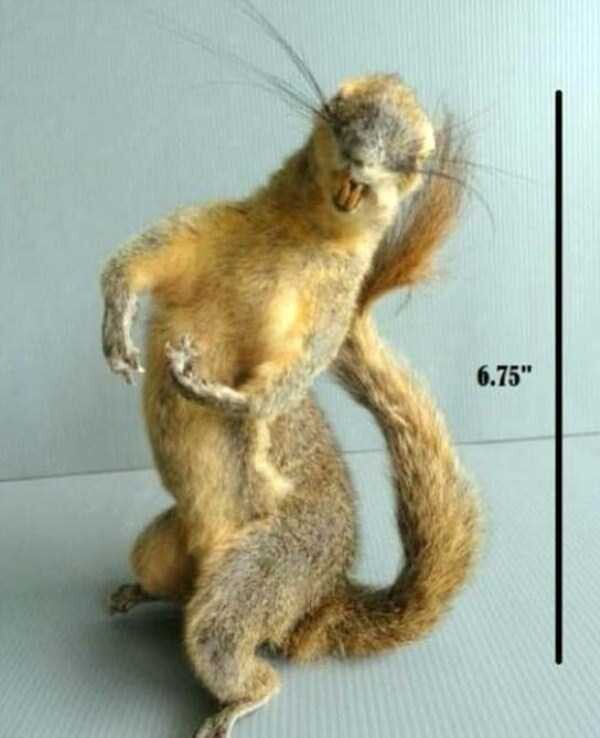 CLUB GIGGLE bad-taxidermy24 22 Times Taxidermy Went Very Very Wrong...