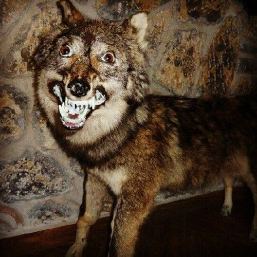 CLUB GIGGLE bad-taxidermy27 22 Times Taxidermy Went Very Very Wrong...