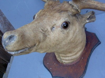 CLUB GIGGLE bad-taxidermy31 22 Times Taxidermy Went Very Very Wrong...