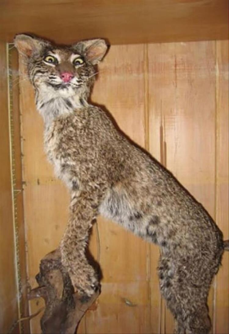 CLUB GIGGLE bad-taxidermy5 22 Times Taxidermy Went Very Very Wrong...