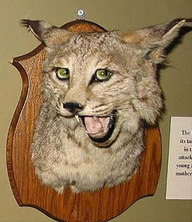 CLUB GIGGLE bad-taxidermy6 22 Times Taxidermy Went Very Very Wrong...