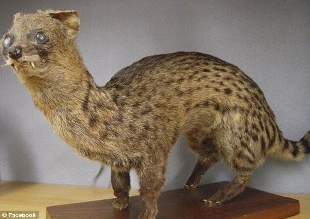 CLUB GIGGLE bad-taxidermy7 22 Times Taxidermy Went Very Very Wrong...