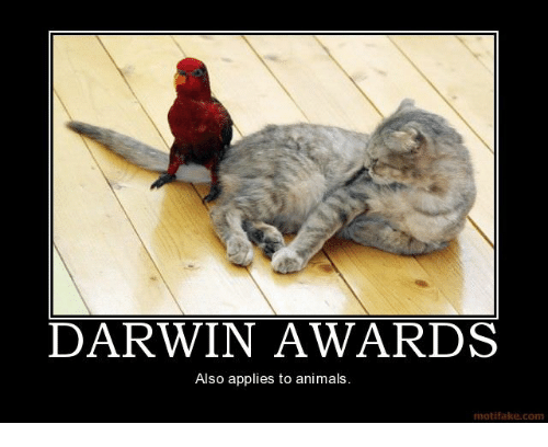 """CLUB GIGGLE darwin-awards-also-applies-to-animals-motifake-com-31404199 Top Answer Still On The Board... Show Us """"Darwin Awards!""""30 Pics"""