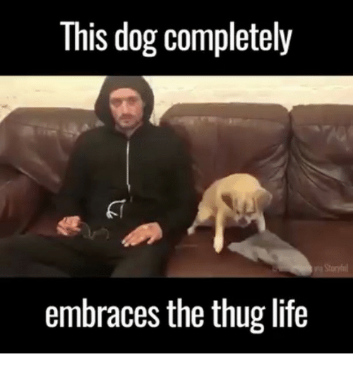 CLUB GIGGLE this-dog-completely-embraces-the-thug-life-23611654 25 Best Thug Life Memes On the Net....