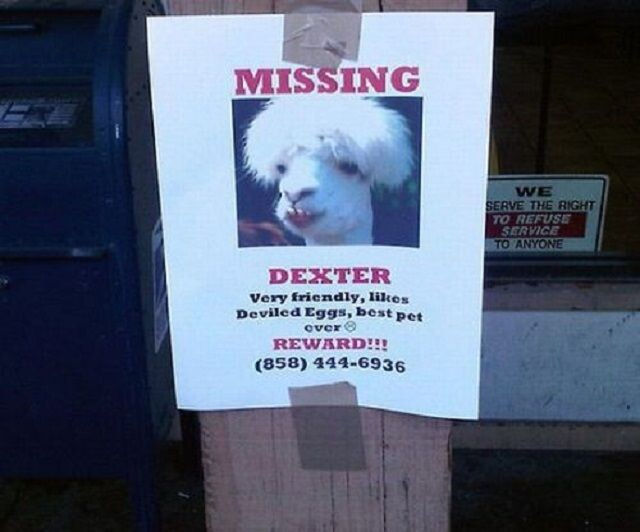 CLUB GIGGLE lost-and-found2 25 Hilarious Lost And Found Signs