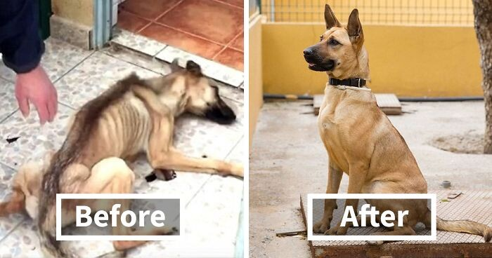 CLUB GIGGLE rescue-dogs-before-after-adoption-FB3-png__700 26 Before-And-After Adoption Pictures Of Dogs and Cats After the Rescue..