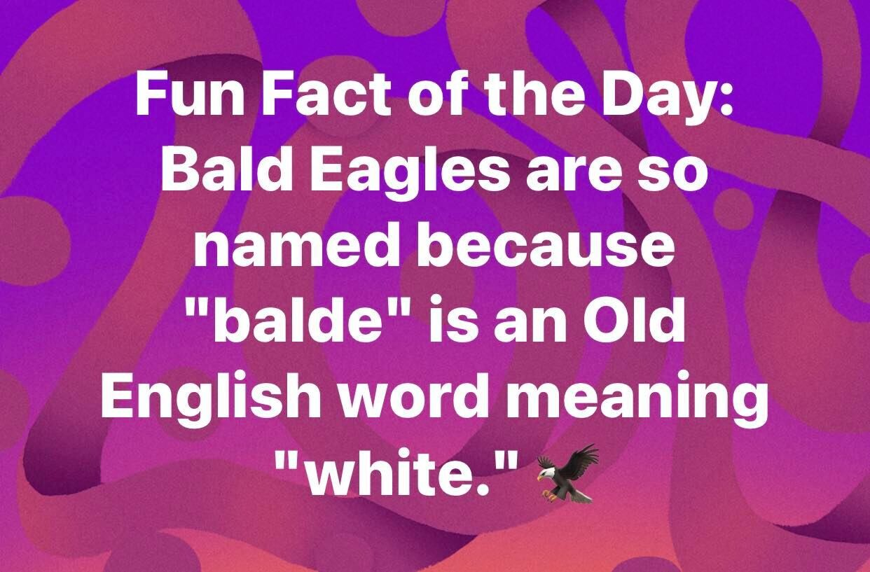 CLUB GIGGLE weird-facts5 25 Weird Fun Facts Of The Day