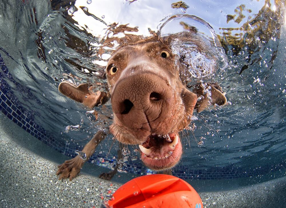 CLUB GIGGLE 133 25 Amazing Pictures of dogs catching treats underwater..