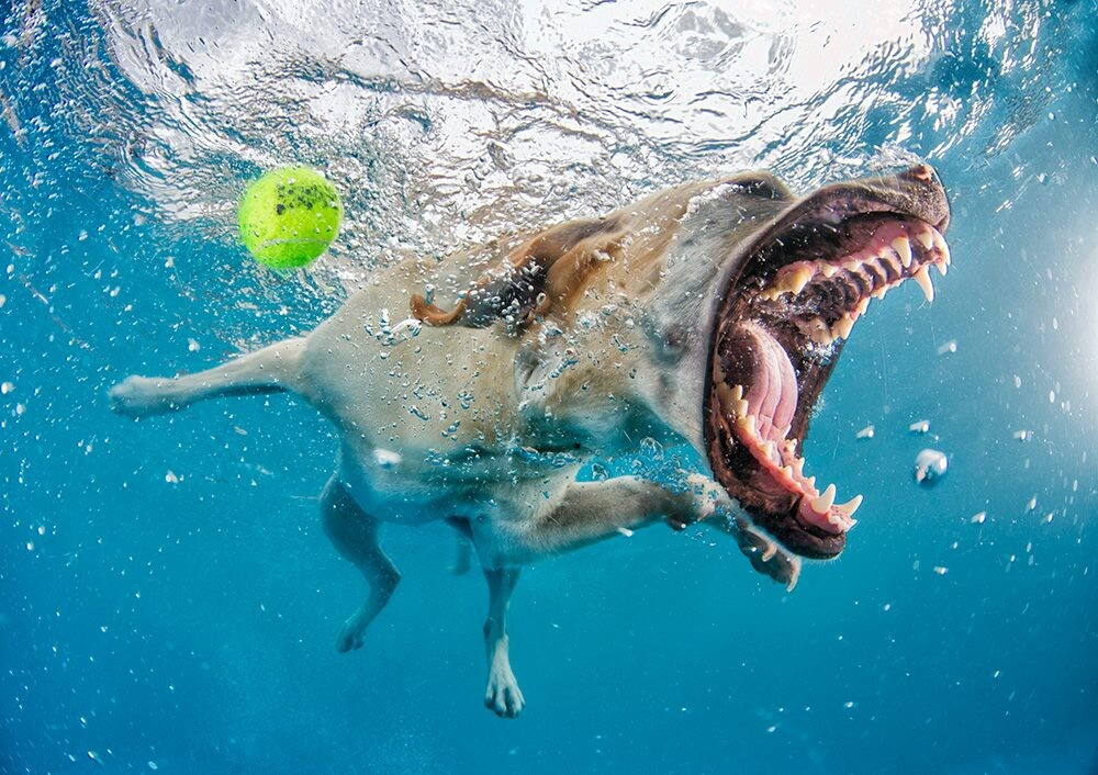 CLUB GIGGLE 21-1 25 Amazing Pictures of dogs catching treats underwater..