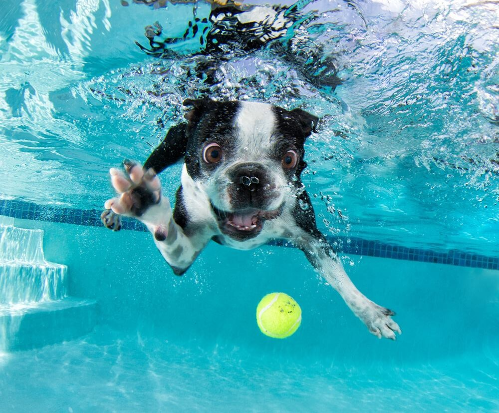 CLUB GIGGLE 23 25 Amazing Pictures of dogs catching treats underwater..