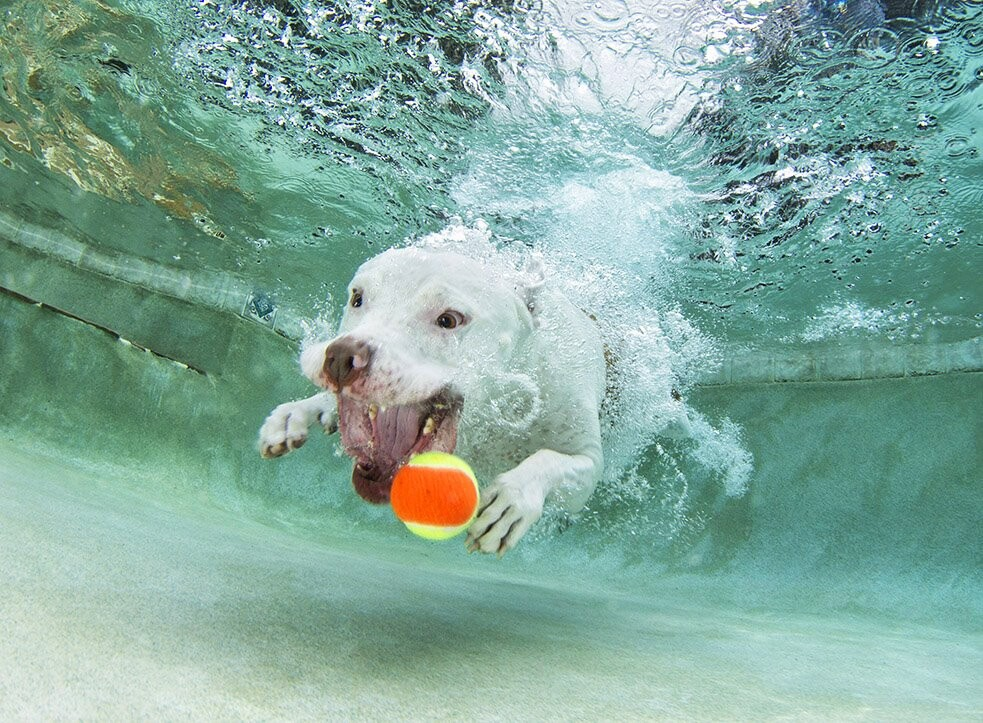 CLUB GIGGLE 2323 25 Amazing Pictures of dogs catching treats underwater..