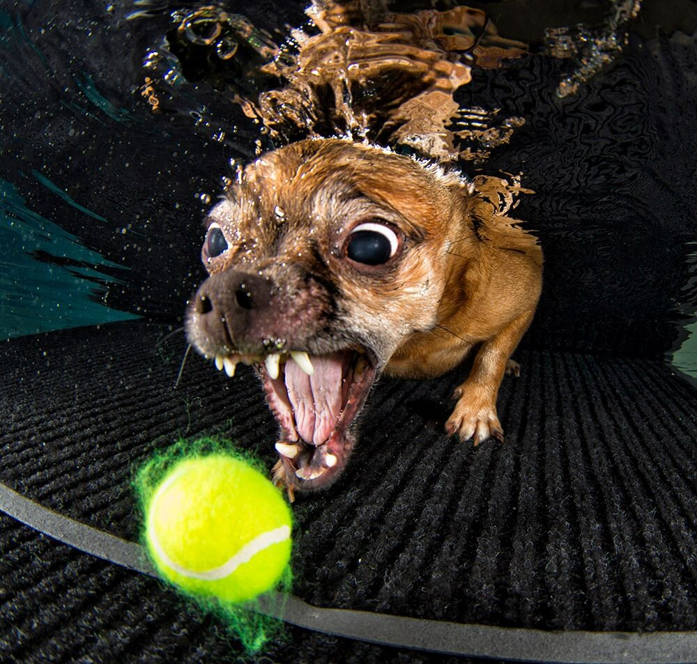 CLUB GIGGLE 44 25 Amazing Pictures of dogs catching treats underwater..