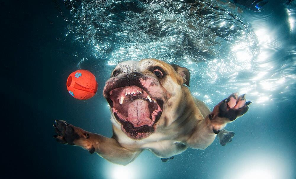 CLUB GIGGLE 55 25 Amazing Pictures of dogs catching treats underwater..