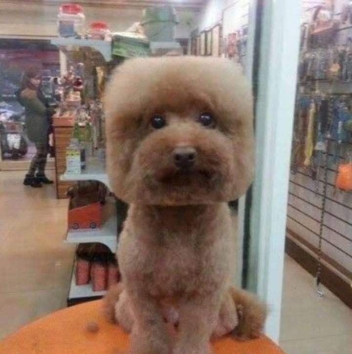 CLUB GIGGLE funny-animal14 I got fired from Pet shop. 17 funny pictures