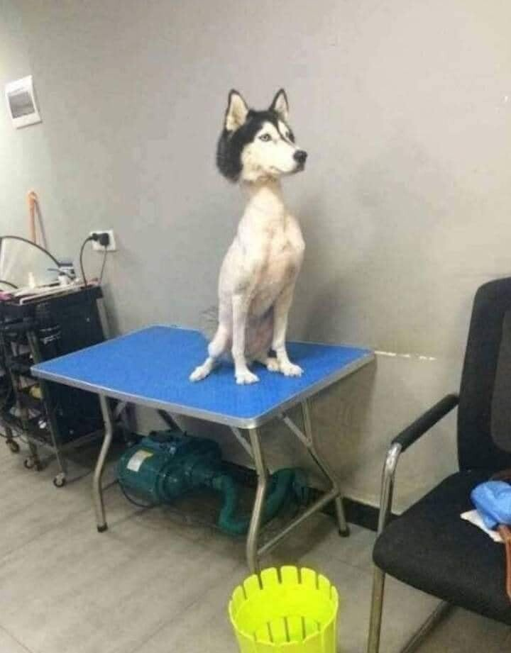 CLUB GIGGLE funny-animal8 I got fired from Pet shop. 17 funny pictures