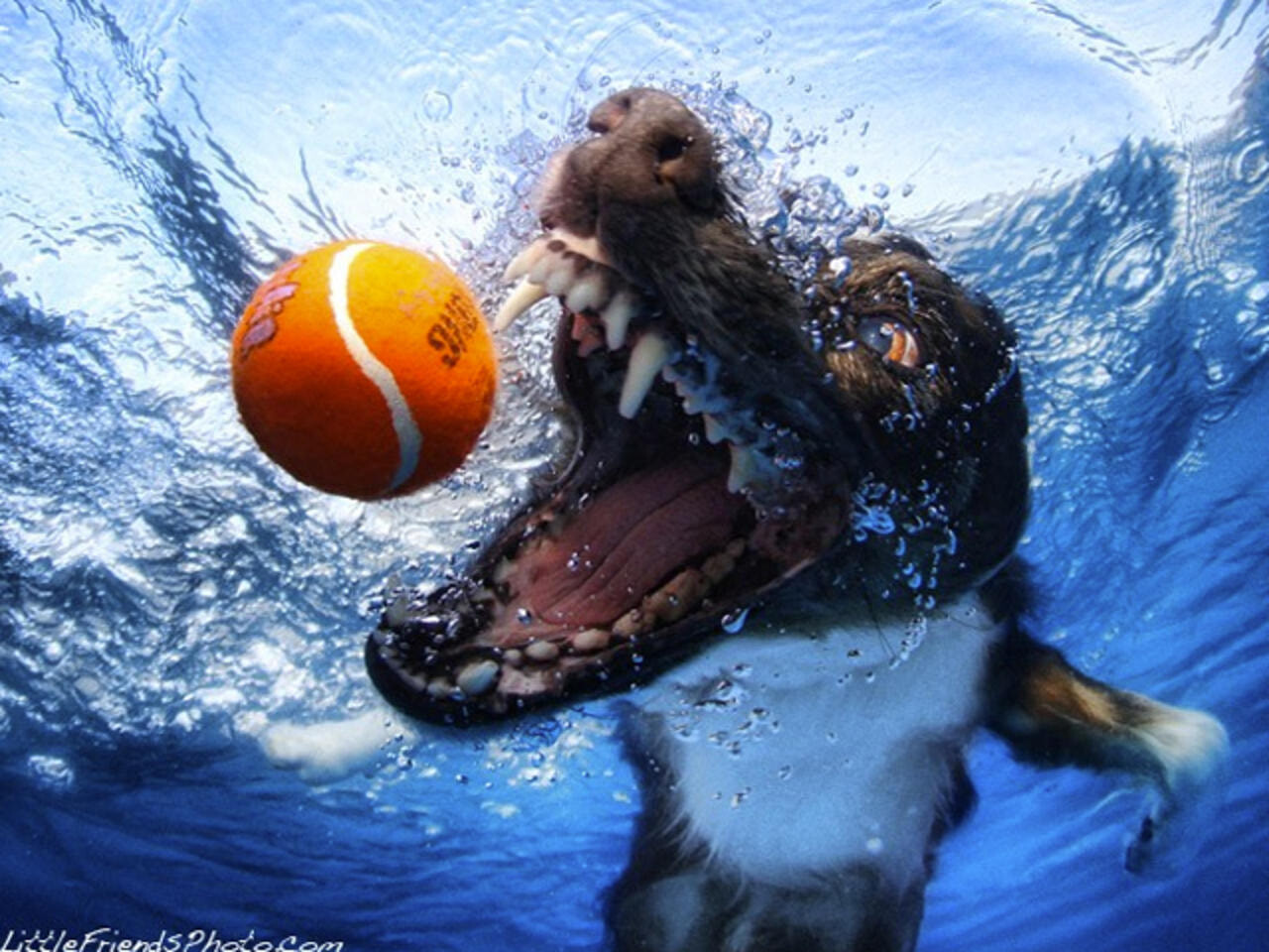 CLUB GIGGLE funny-dogs1-1 25 Amazing Pictures of dogs catching treats underwater..