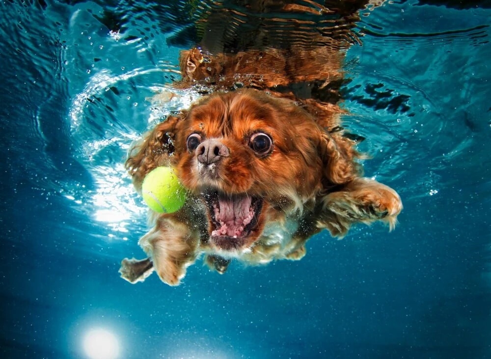 CLUB GIGGLE funny-dogs11-1 25 Amazing Pictures of dogs catching treats underwater..