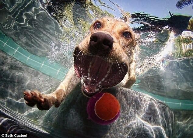 CLUB GIGGLE funny-dogs12-1 25 Amazing Pictures of dogs catching treats underwater..