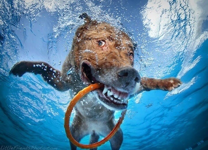 CLUB GIGGLE funny-dogs13-1 25 Amazing Pictures of dogs catching treats underwater..