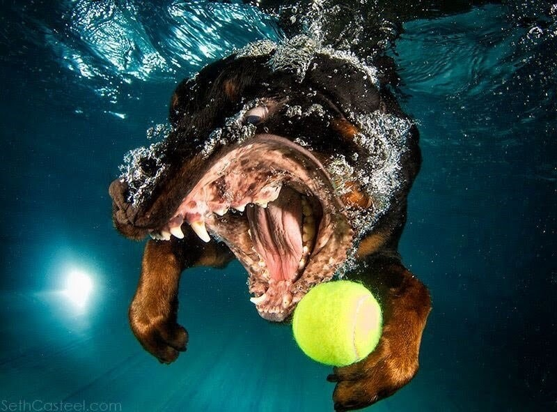 CLUB GIGGLE funny-dogs15 25 Amazing Pictures of dogs catching treats underwater..