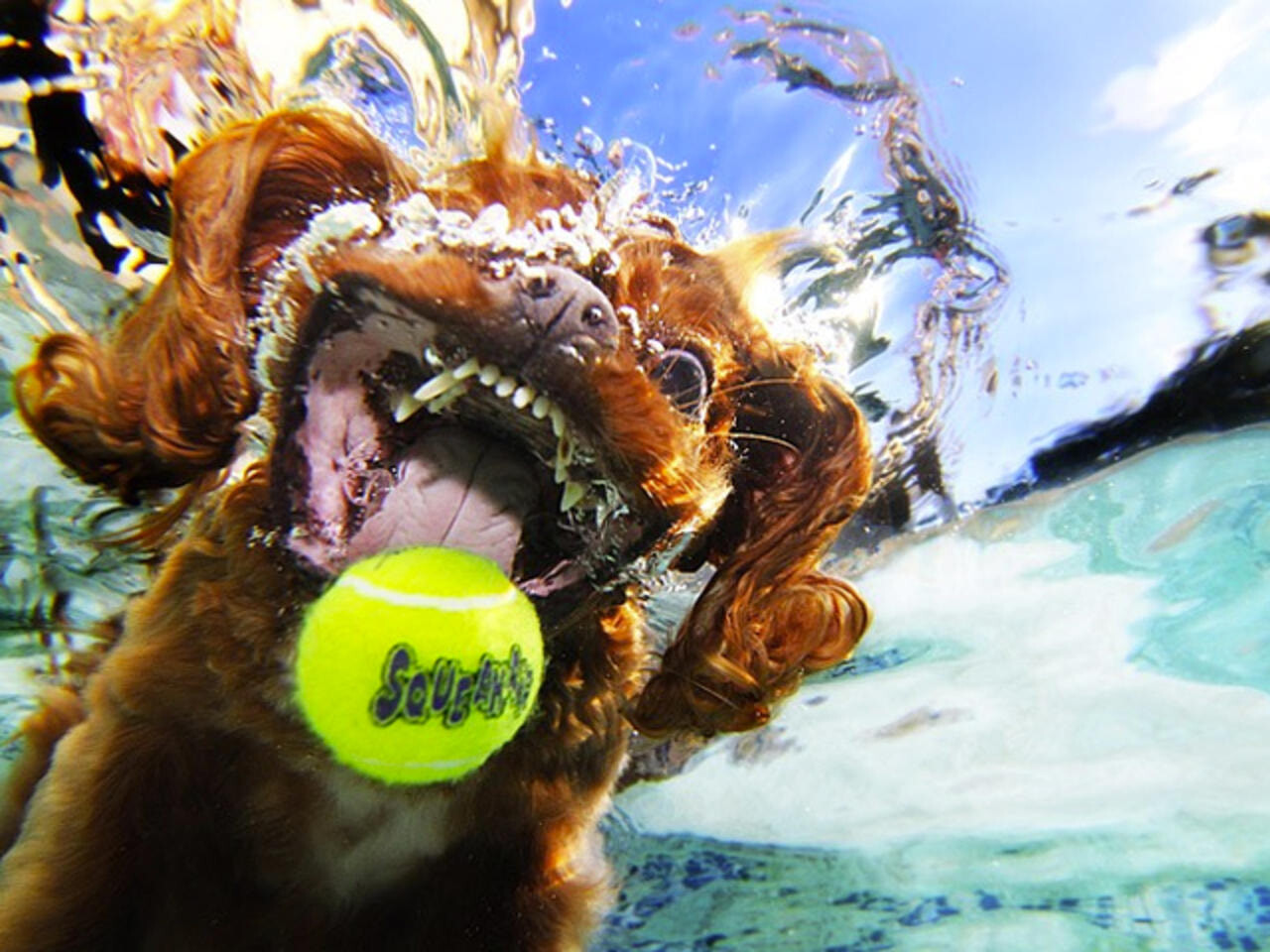 CLUB GIGGLE funny-dogs2-1 25 Amazing Pictures of dogs catching treats underwater..