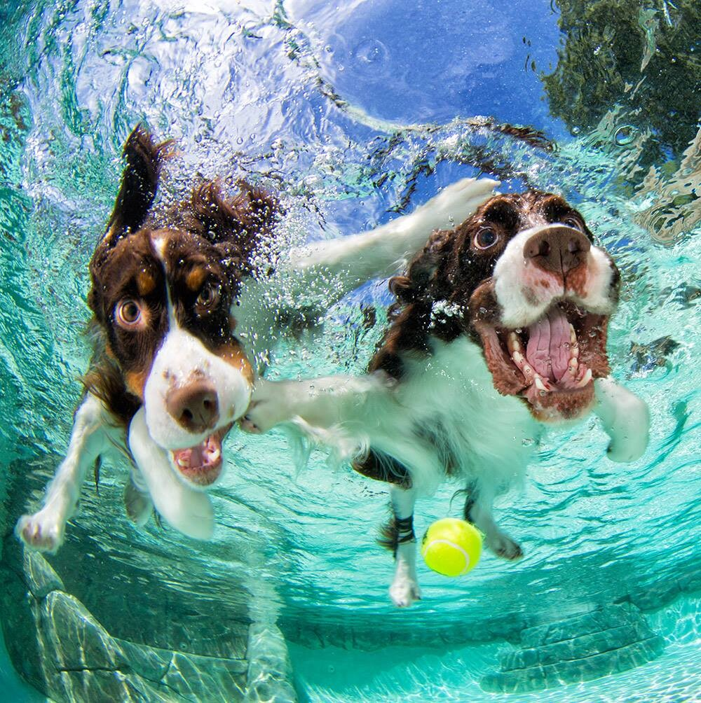 CLUB GIGGLE funny-dogs23 25 Amazing Pictures of dogs catching treats underwater..