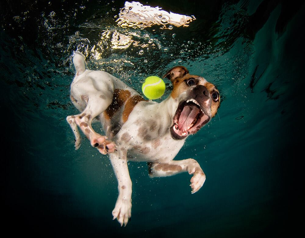 CLUB GIGGLE funny-dogs24 25 Amazing Pictures of dogs catching treats underwater..