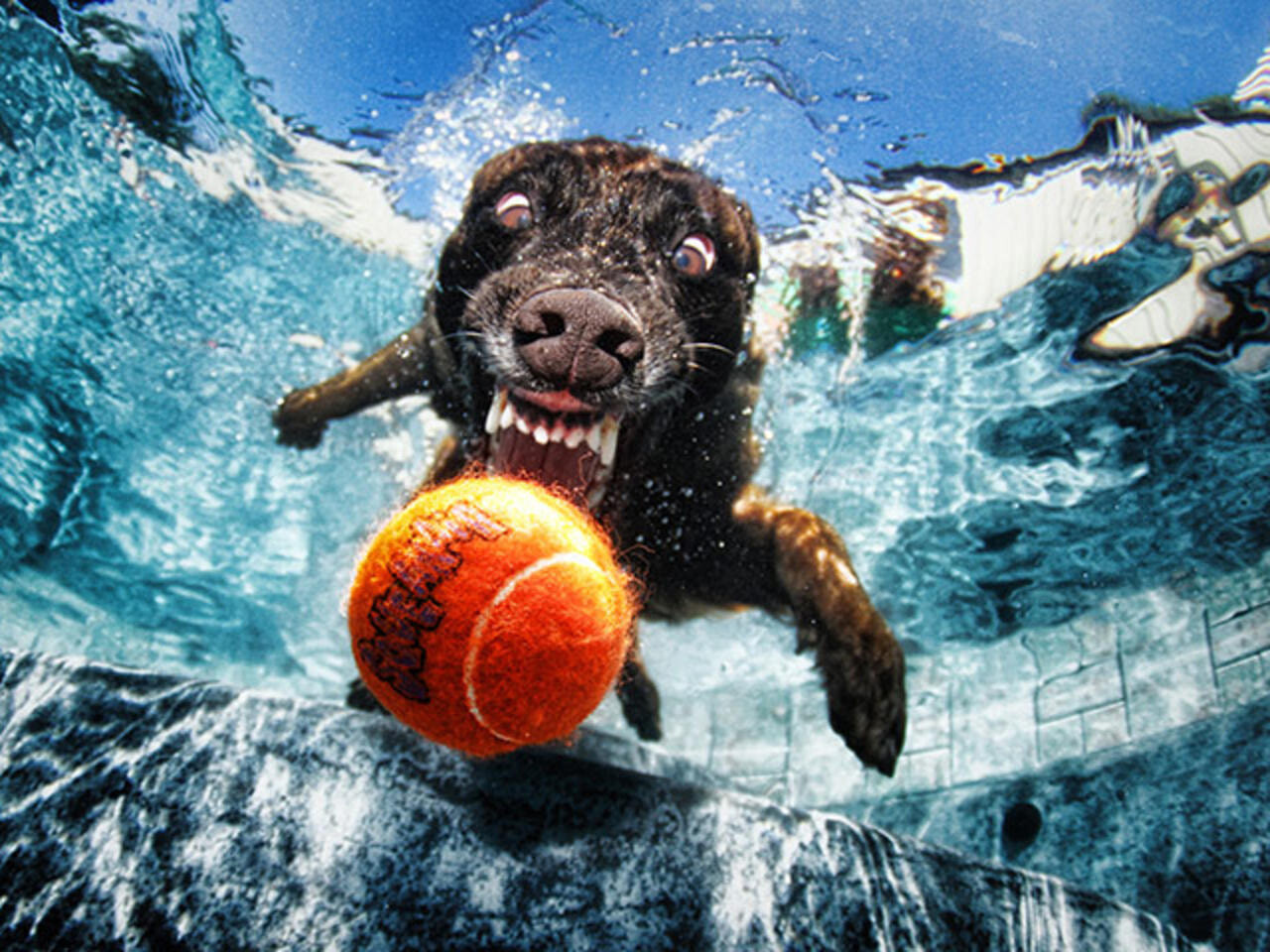 CLUB GIGGLE funny-dogs5-1 25 Amazing Pictures of dogs catching treats underwater..