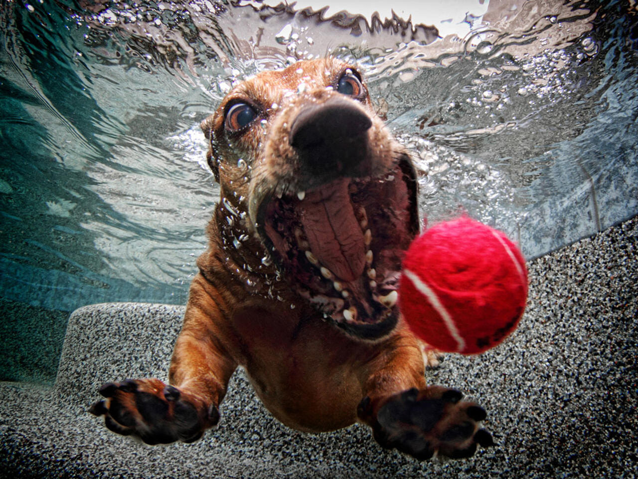 CLUB GIGGLE funny-dogs7-1 25 Amazing Pictures of dogs catching treats underwater..