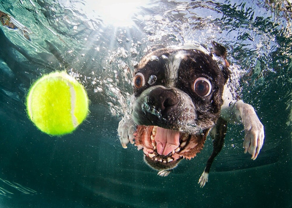 CLUB GIGGLE funny-dogs9-1 25 Amazing Pictures of dogs catching treats underwater..