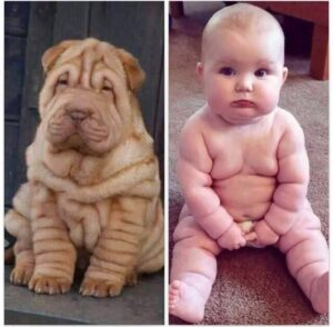 CLUB GIGGLE Baby-Rolls-300x294 Pets Who Are Identical To Their Owners