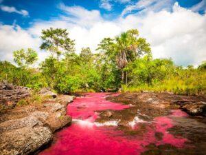 CLUB GIGGLE Cano-Cristales-Serrania-de-la-Macarena-Colombia-300x225 Top Ten Wonders of Nature! (Part 1)