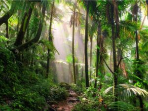 CLUB GIGGLE El-Yunque-National-Forest-Puerto-Rico-300x225 Top Ten Wonders of Nature! (Part 1)