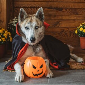 CLUB GIGGLE Vampire-DOgg-300x300 The Most Adorable Halloween Costume For Dogs