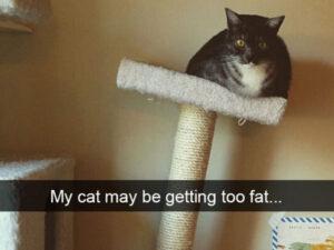CLUB GIGGLE fatcat-300x225 Cats Causing Mayhem!